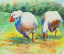 Giggle of geese 2