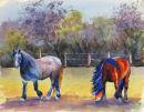 More Stradbroke Horses