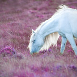 Welsh pony in pink