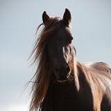Sunlit...Fell pony