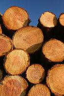 Freshly-cut logs