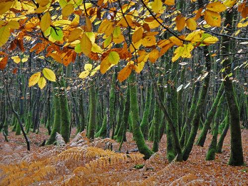 Leaves, mossy trunks and bracken
