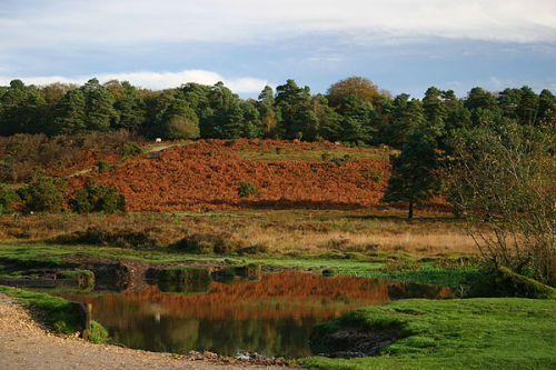 Autumn bracken