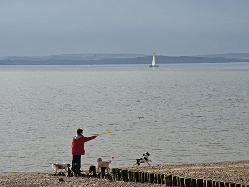 Throwing a stone for the dog