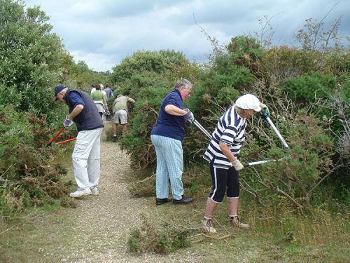 Volunteers clearing gorse