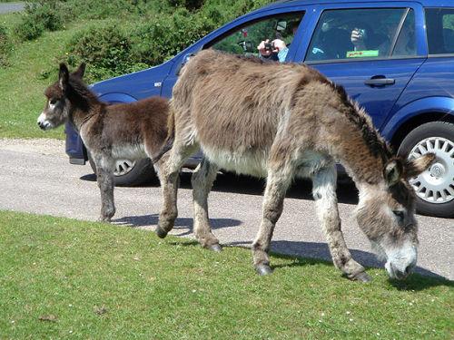 Photographing donkeys