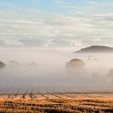 Autumn mist over Fox Covert Plantation mg 0039