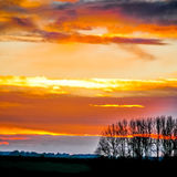 Line of Gold ~ sunset and trees mg 010