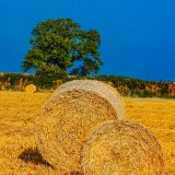 Little and large ~ bales mg 015