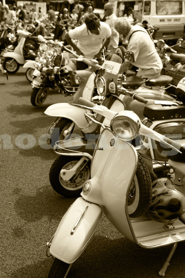 SCOOTS IN A ROW - SEPIA