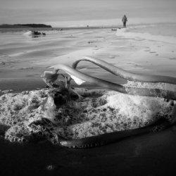 Beach Sculpture - Findhorn