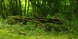 Green Dereliction