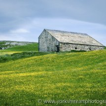Buttercup Meadow and Barn, Ribblesdale, Yorkshire Dales, UK