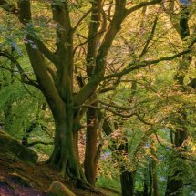 Sunlit Woodland. Otley Chevin, West Yorkshire, UK