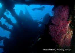 Diver on Liberty Wreck
