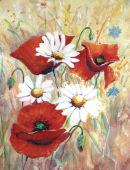 Poppies & Daisies