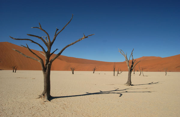 Dead Trees, Namibia