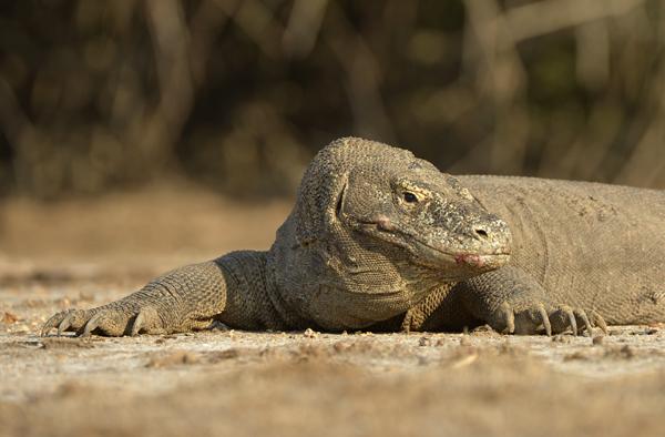 A Dragon takes a rest.