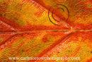 Autumn colours close-up.
