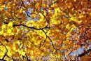 Autumn's palette.