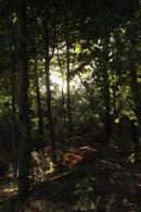 Deciduous woodland
