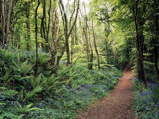 A woodland trail in Spring, County Cavan, Ireland.