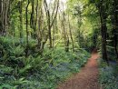 A woodland trail in Spring, County Cavan, Ireland.