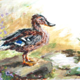 Duck by Puddle