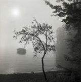 321-Misty Morning Acacia Bay