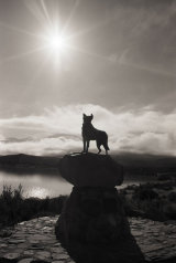 509-Statue to the Sheepdog Tekapo