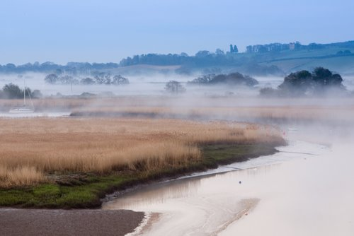 Topsham_Reed_Beds