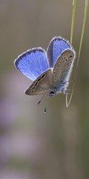 Paphos Blue