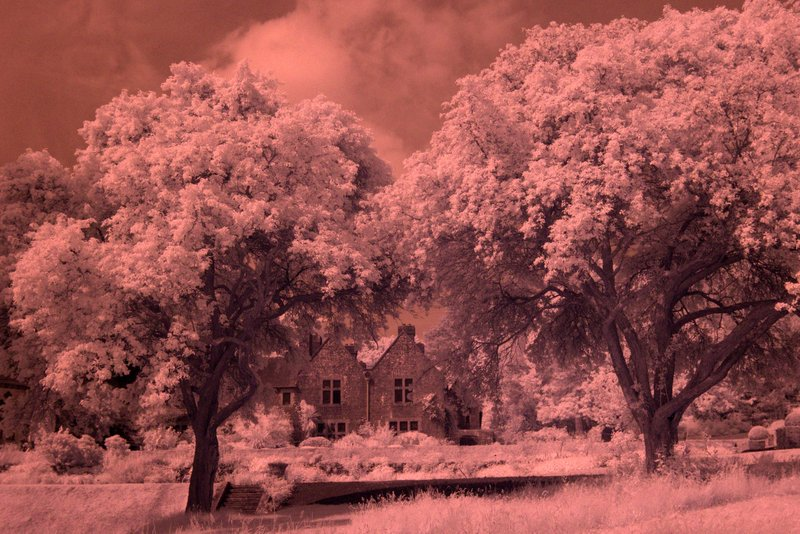 Building and Trees IR