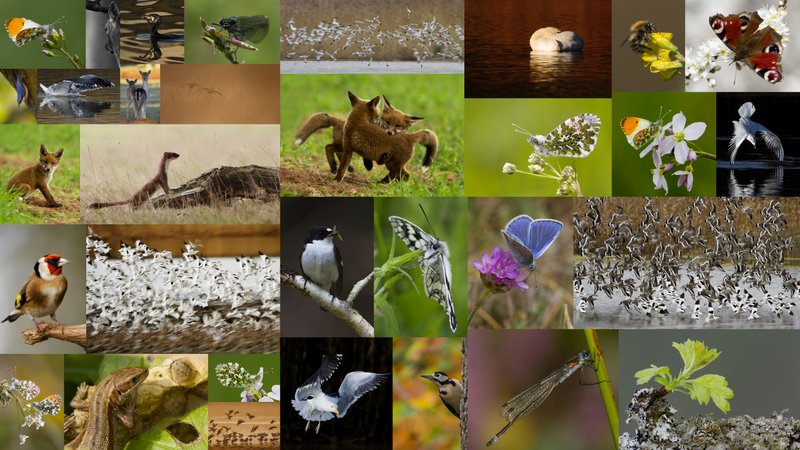 Selection of BWPA 2012 Entries