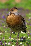 Duck_Portrait
