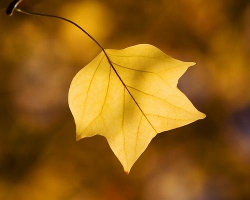 Autumn Tulip Tee