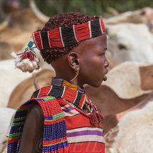 Hamar girl with bulls