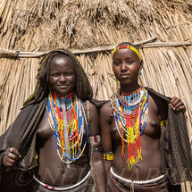 Arbore - Young beauties
