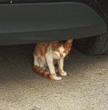 Kitten hiding under a car.