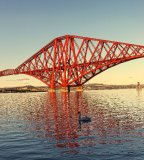 FORTH RAIL BRIDGE WITH SWAN