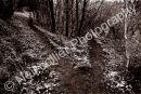 Bishopston Woodland Landscape 01