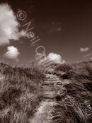 Three Cliffs Sepia Portrait (2)