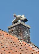 White Stork, Park Dzikich Zwierzat, Kadzidlowo, Poland