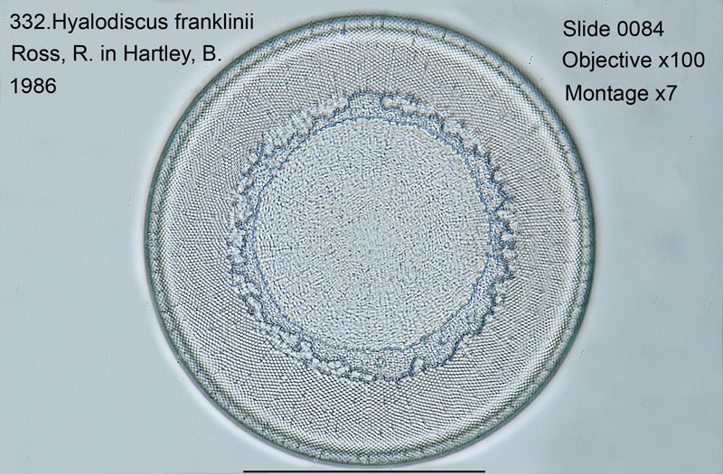 332. Hyalodiscus franklinii