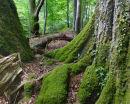 Ebernoe Common