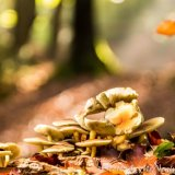 Fungus and rays of light on Halloween at Burnham Beeches 2016-4803