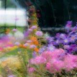 RHS Wisley-Alpine House flowers looking through rain-1118