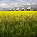 Alberta Prairie.