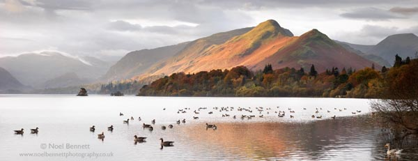 Wildlife On Derwent Water