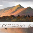 Wildlife On Derwent Water